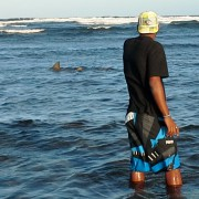 lemon sharks in cape verde